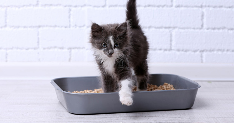 Cat Litter for Odor Control