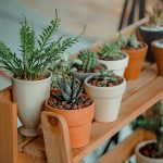 Outdoor Plant Shelves